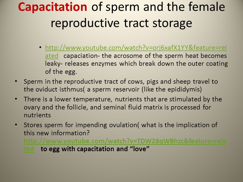 Capacitation of sperm and the female reproductive tract storage http://www.youtube.com/watch?v=orj6xafX1YY&feature=rel ated capaciation- the acrosome