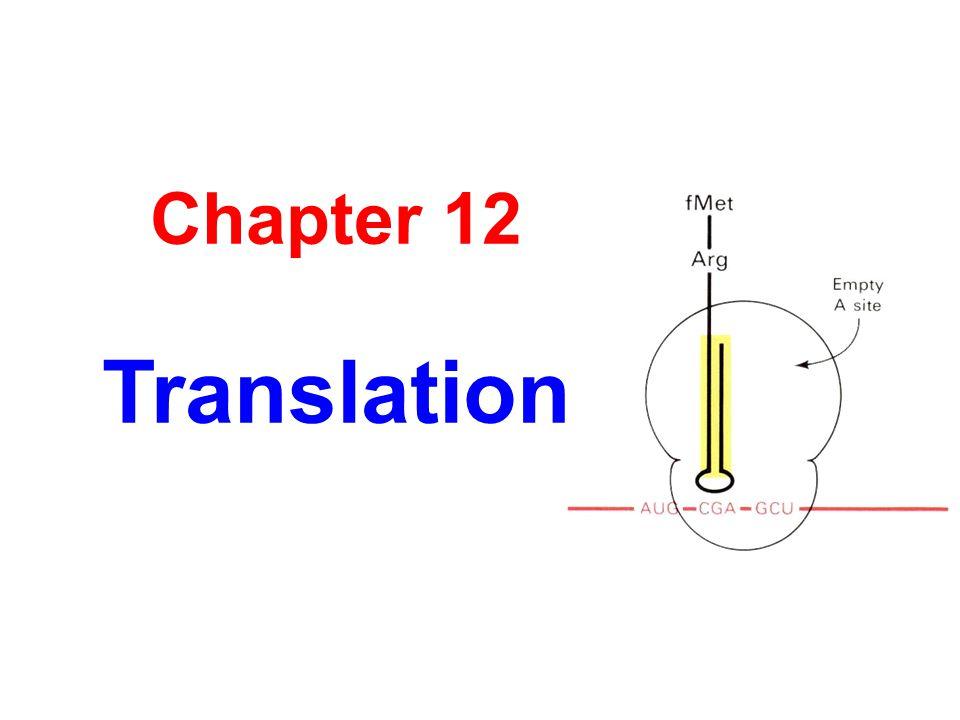 Chapter 12 Translation