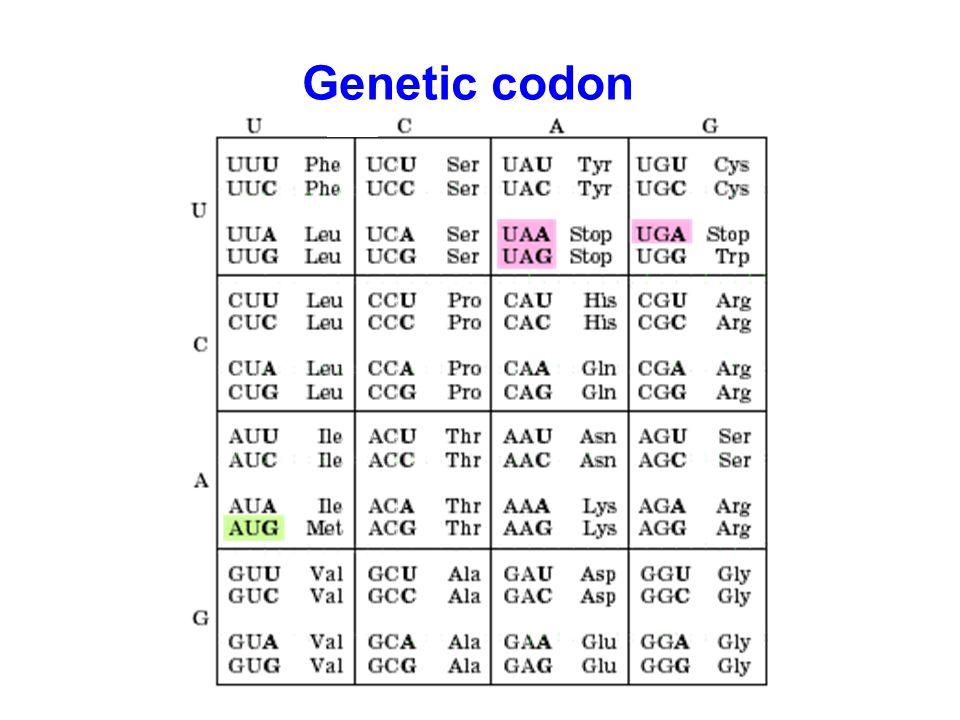 Genetic codon
