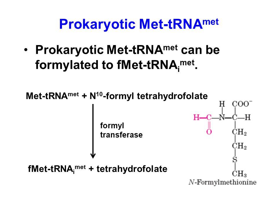 Prokaryotic Met-tRNA met can be formylated to fMet-tRNA i met. Prokaryotic Met-tRNA met Met-tRNA met + N 10 -formyl tetrahydrofolate fMet-tRNA i met +