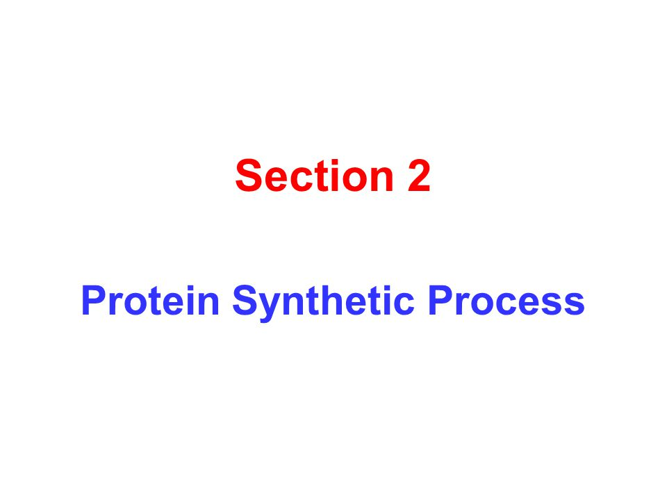 Section 2 Protein Synthetic Process