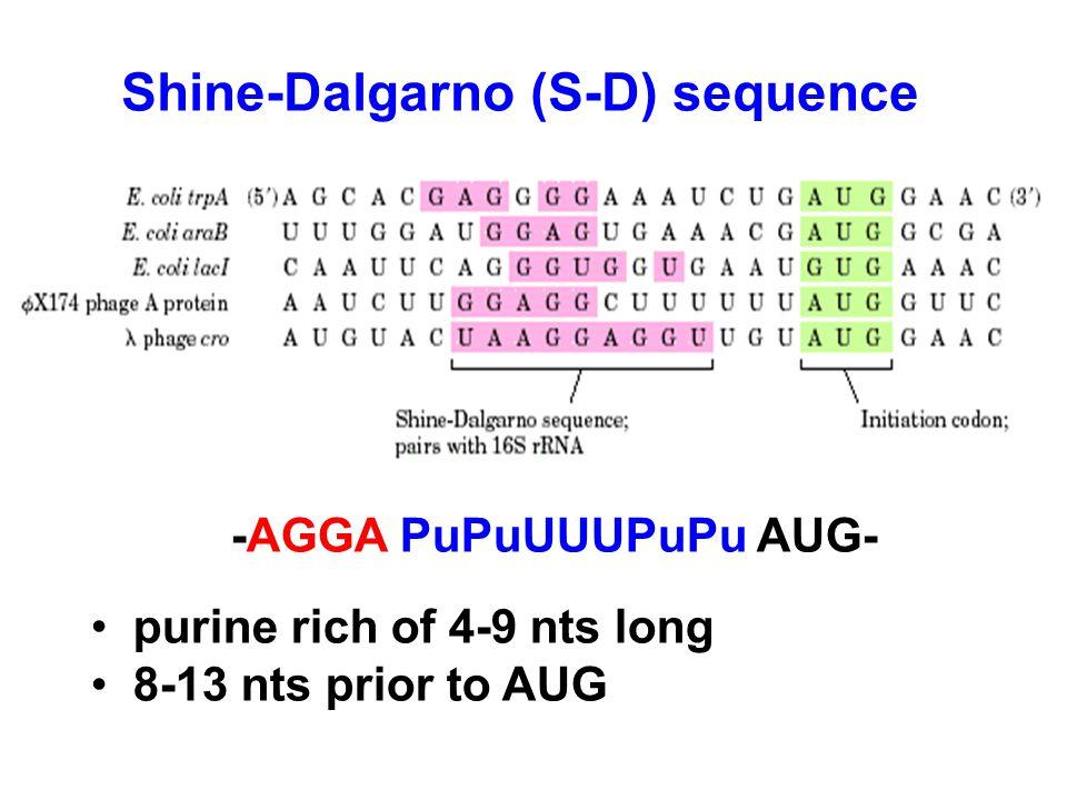 Shine-Dalgarno (S-D) sequence -AGGA PuPuUUUPuPu AUG- purine rich of 4-9 nts long 8-13 nts prior to AUG