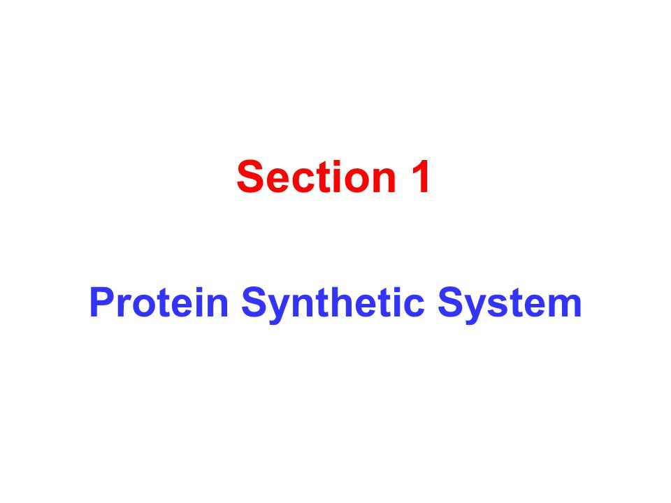Section 1 Protein Synthetic System
