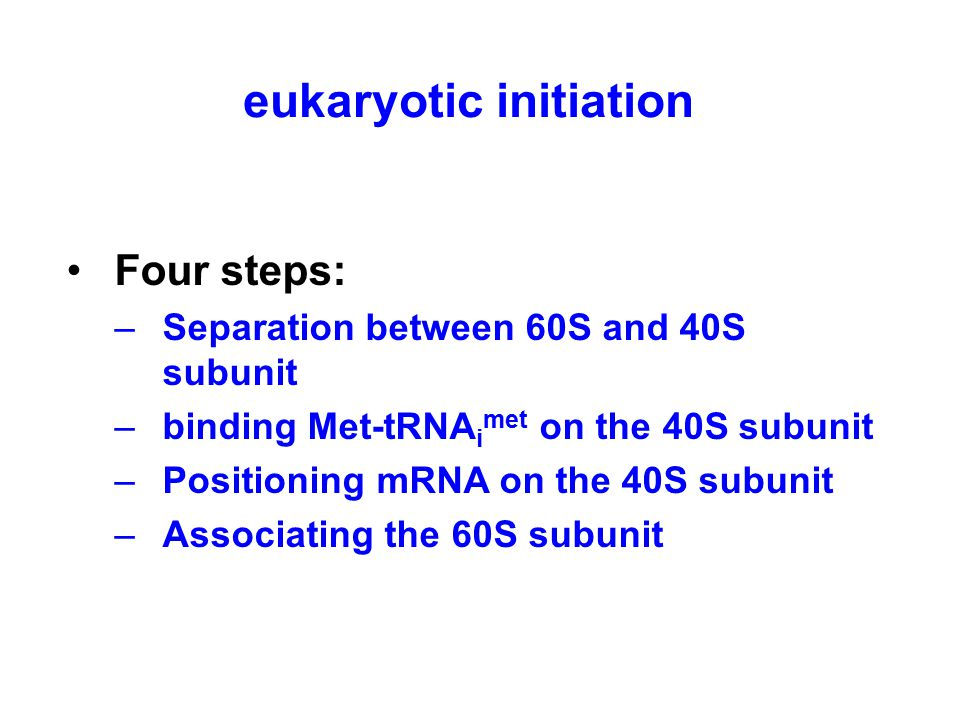 Four steps: –Separation between 60S and 40S subunit –binding Met-tRNA i met on the 40S subunit –Positioning mRNA on the 40S subunit –Associating the 60S subunit eukaryotic initiation