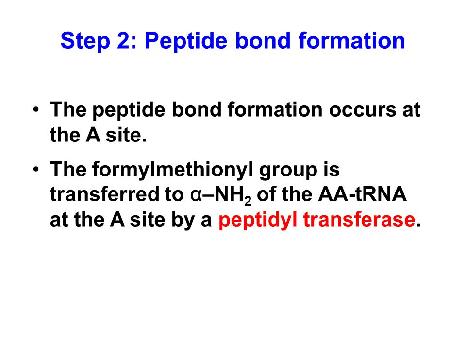 Step 2: Peptide bond formation The peptide bond formation occurs at the A site.