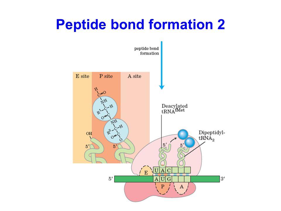 Peptide bond formation 2