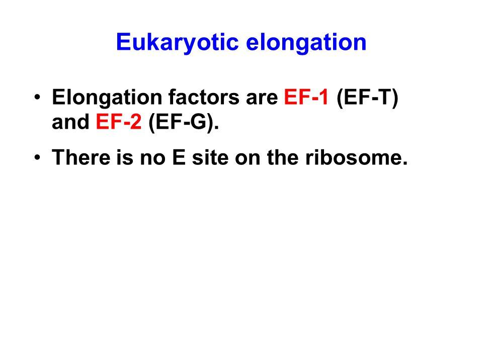Eukaryotic elongation Elongation factors are EF-1 (EF-T) and EF-2 (EF-G). There is no E site on the ribosome.