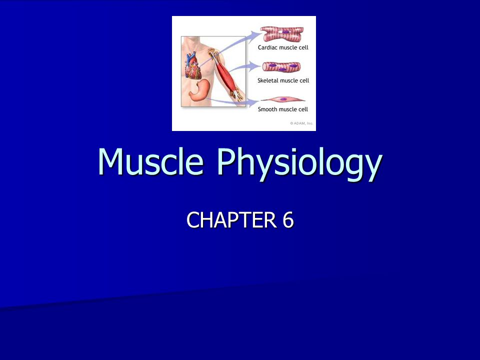 c.Graded Responses and Various Muscle Contractions c.