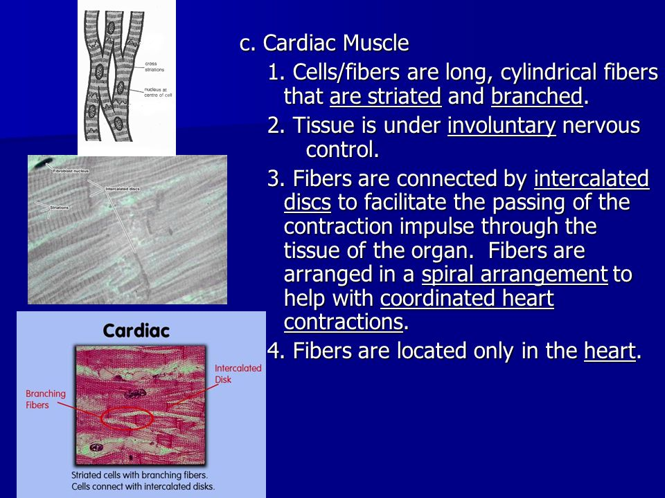 IIThe functions of muscles 1.