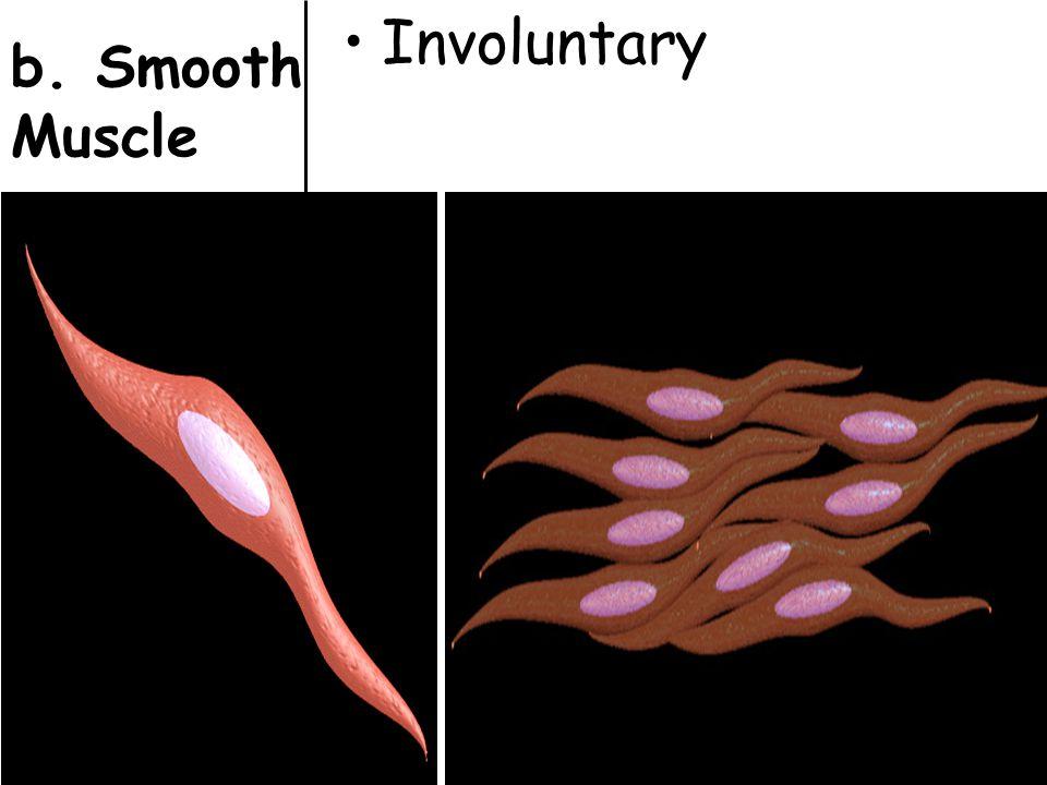 Involuntary b. Smooth Muscle