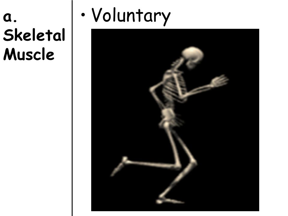 a. Skeletal Muscle Voluntary