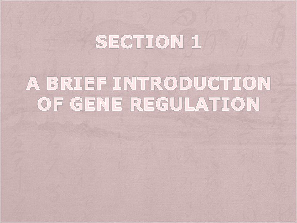 Key points: Gene expression, activator, repressor,positive gene regulation, negative gene regulation, signal integration, combinatorial Control, cis-a