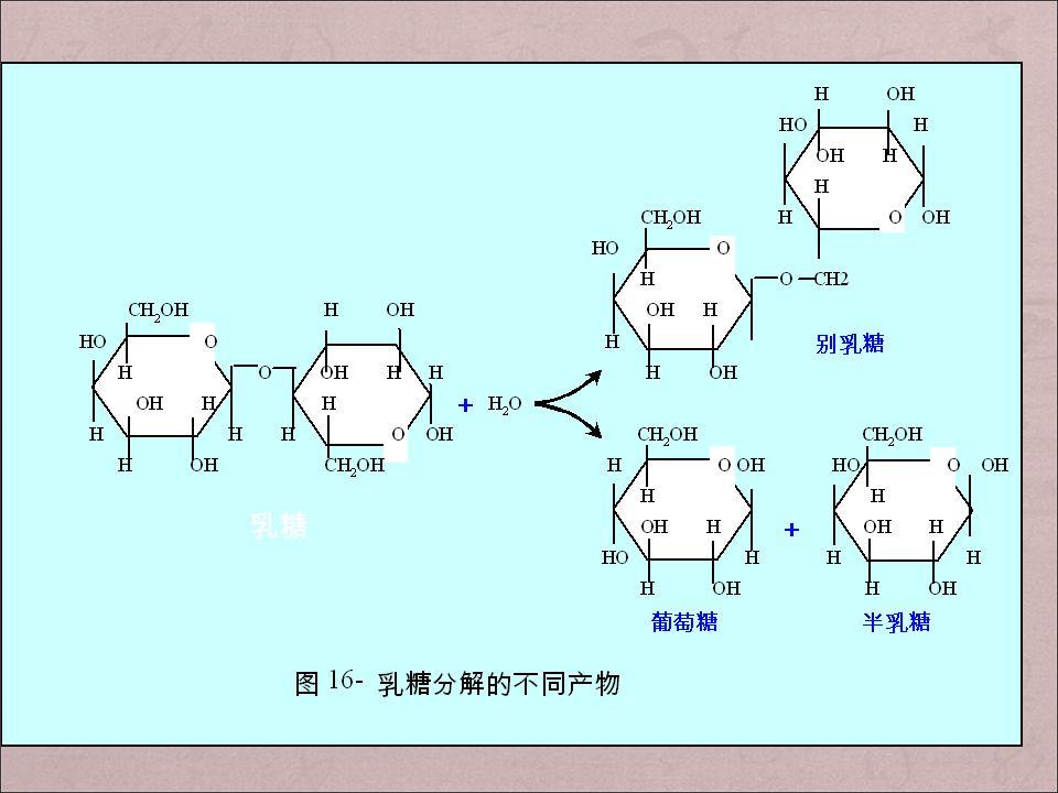 培养基:甘油,缺少乳糖 按照 lac 操纵子本底水平的表达,每个细胞内有几个 分子的 β- 半乳糖苷酶和 β- 半乳糖苷透过酶; 培养基:加入乳糖 少量乳糖 透过酶 进入细胞 β- 半乳糖苷酶 异构乳糖 诱导物 诱导 lac mRNA 的生物合成大量乳糖进入细胞 多数被降解为葡萄糖和半乳糖(碳源和能