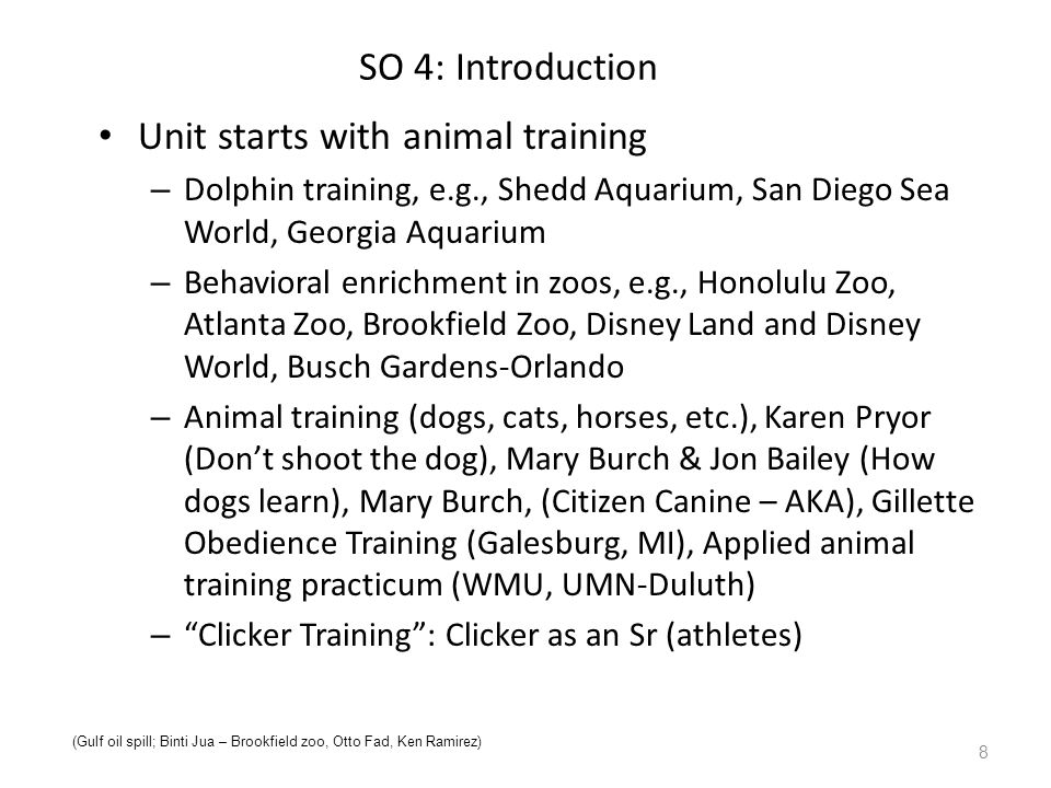 SO 4: Introduction Unit starts with animal training – Dolphin training, e.g., Shedd Aquarium, San Diego Sea World, Georgia Aquarium – Behavioral enrichment in zoos, e.g., Honolulu Zoo, Atlanta Zoo, Brookfield Zoo, Disney Land and Disney World, Busch Gardens-Orlando – Animal training (dogs, cats, horses, etc.), Karen Pryor (Don't shoot the dog), Mary Burch & Jon Bailey (How dogs learn), Mary Burch, (Citizen Canine – AKA), Gillette Obedience Training (Galesburg, MI), Applied animal training practicum (WMU, UMN-Duluth) – Clicker Training : Clicker as an Sr (athletes) 8 (Gulf oil spill; Binti Jua – Brookfield zoo, Otto Fad, Ken Ramirez)