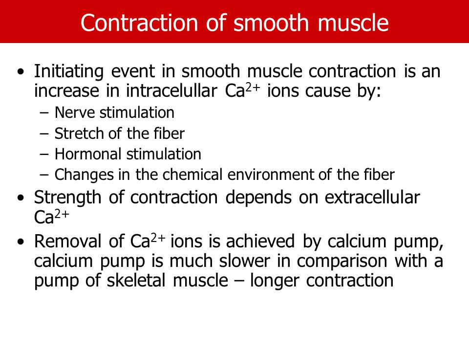 Contraction of smooth muscle Initiating event in smooth muscle contraction is an increase in intracelullar Ca 2+ ions cause by: –Nerve stimulation –Stretch of the fiber –Hormonal stimulation –Changes in the chemical environment of the fiber Strength of contraction depends on extracellular Ca 2+ Removal of Ca 2+ ions is achieved by calcium pump, calcium pump is much slower in comparison with a pump of skeletal muscle – longer contraction