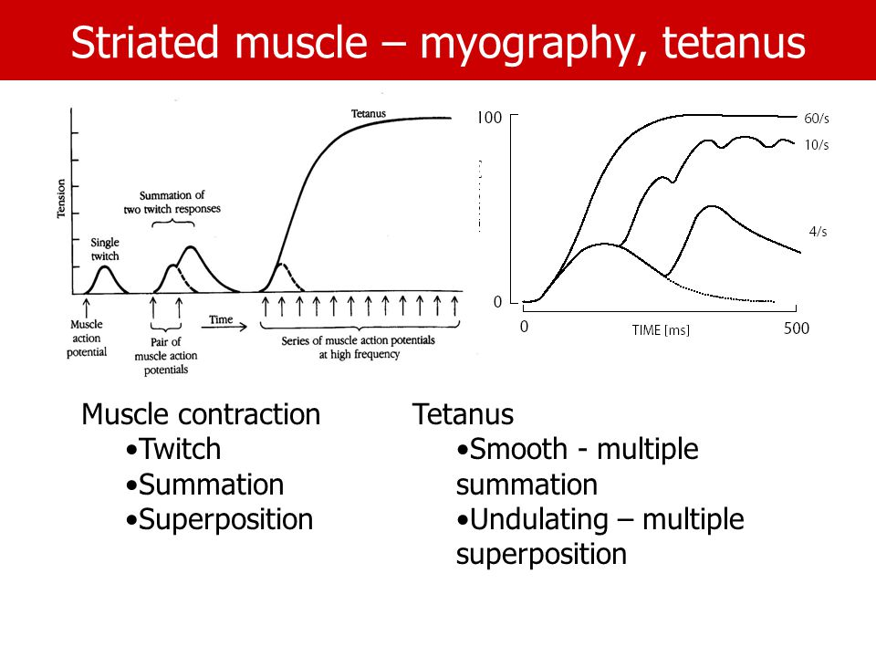 Striated muscle – myography, tetanus Muscle contraction Twitch Summation Superposition Tetanus Smooth - multiple summation Undulating – multiple superposition