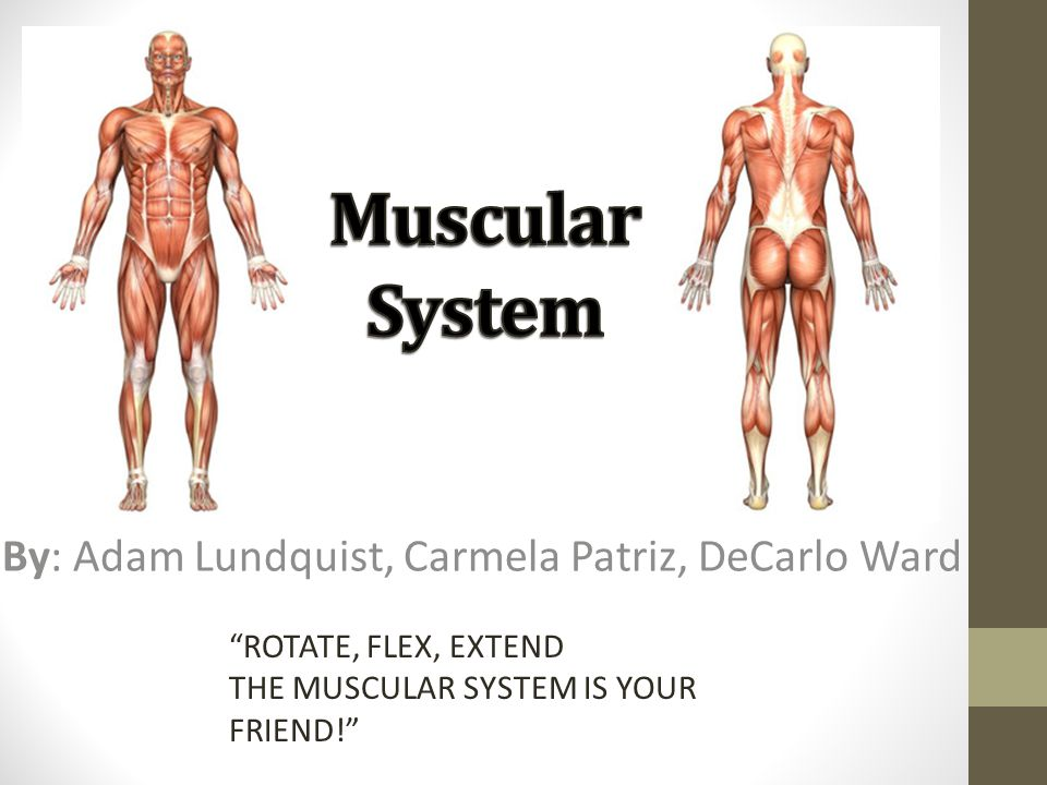 The Major Functions of the muscular system: Skeletal muscles contract which moves the body.