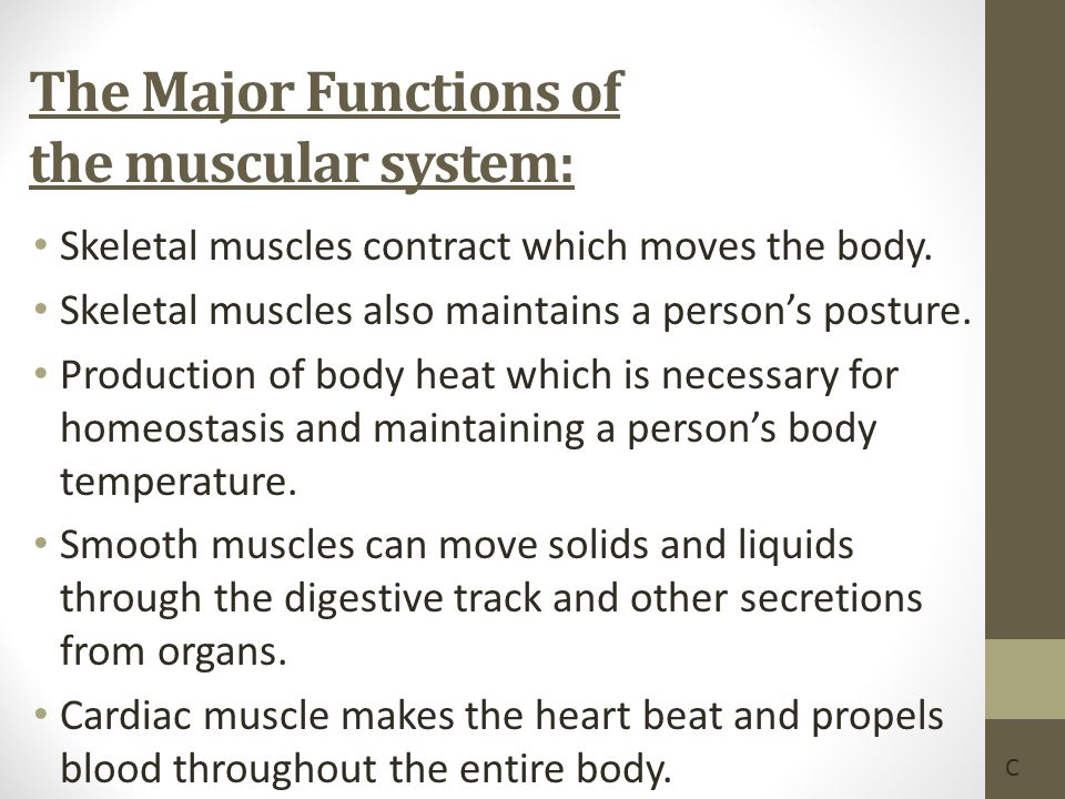 The Major Functions of the muscular system: Skeletal muscles contract which moves the body. Skeletal muscles also maintains a person's posture. Produc