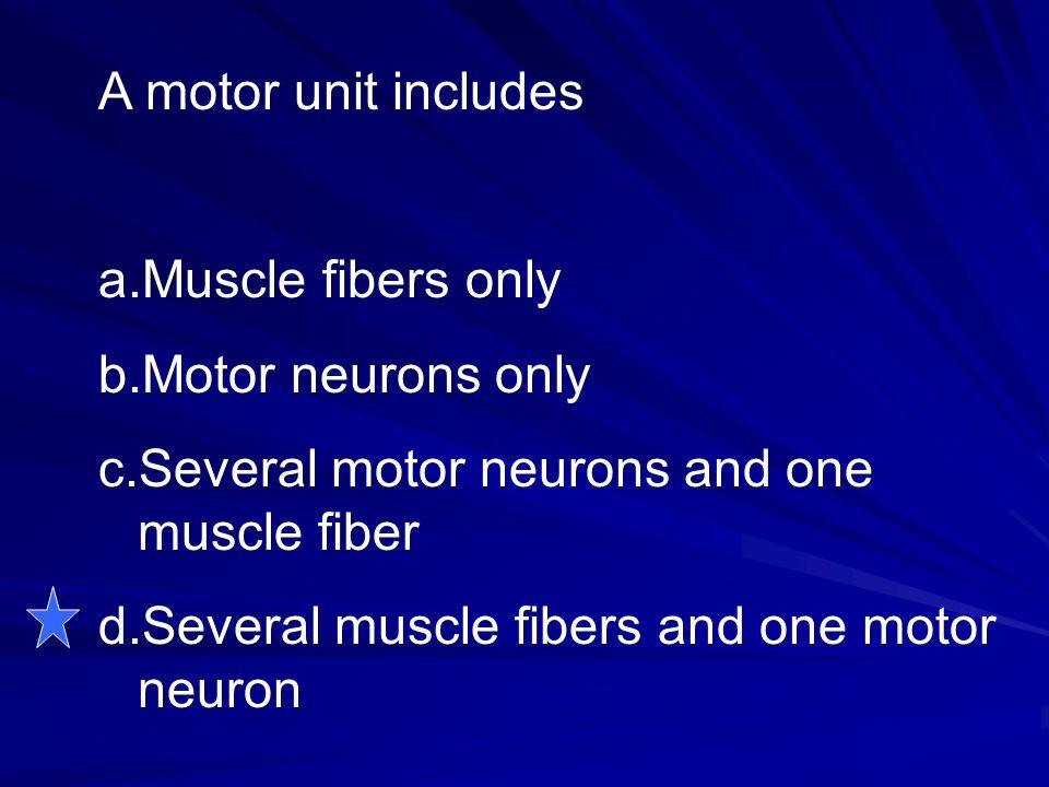 A motor unit includes a.Muscle fibers only b.Motor neurons only c.Several motor neurons and one muscle fiber d.Several muscle fibers and one motor neu