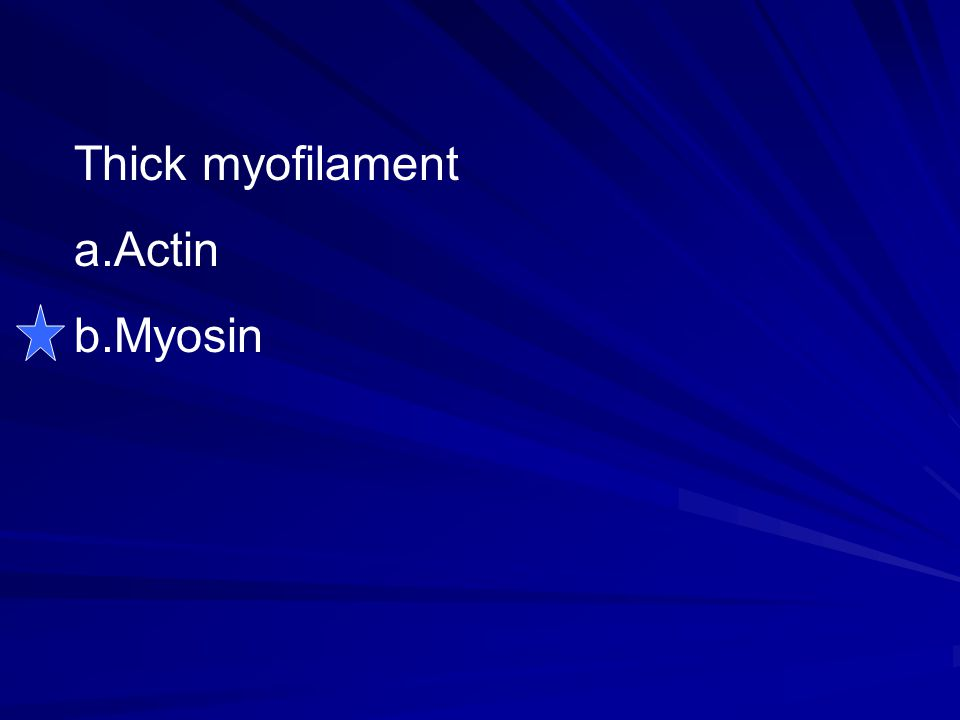 Thick myofilament a.Actin b.Myosin
