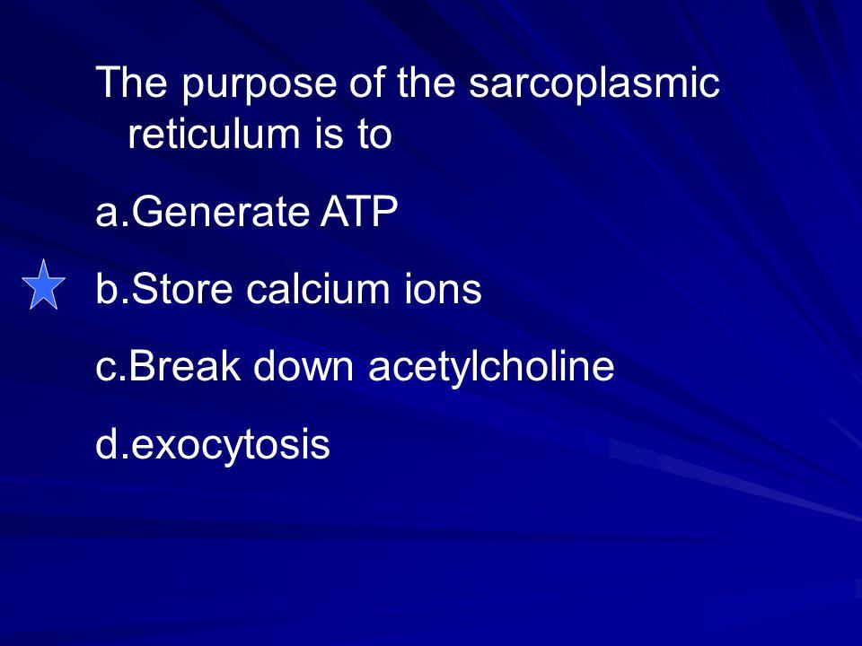 The purpose of the sarcoplasmic reticulum is to a.Generate ATP b.Store calcium ions c.Break down acetylcholine d.exocytosis