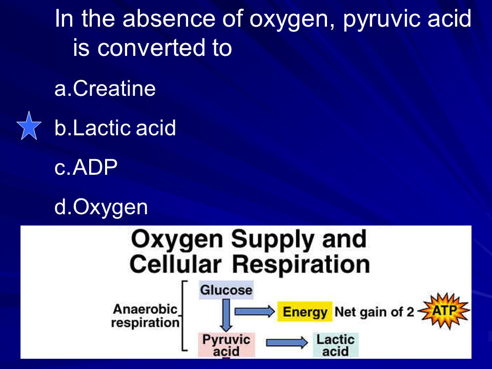 In the absence of oxygen, pyruvic acid is converted to a.Creatine b.Lactic acid c.ADP d.Oxygen