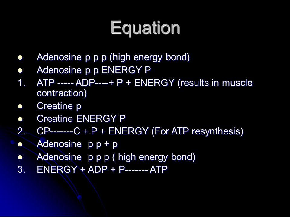 Equation Adenosine p p p (high energy bond) Adenosine p p p (high energy bond) Adenosine p p ENERGY P Adenosine p p ENERGY P 1.ATP ----- ADP----+ P +