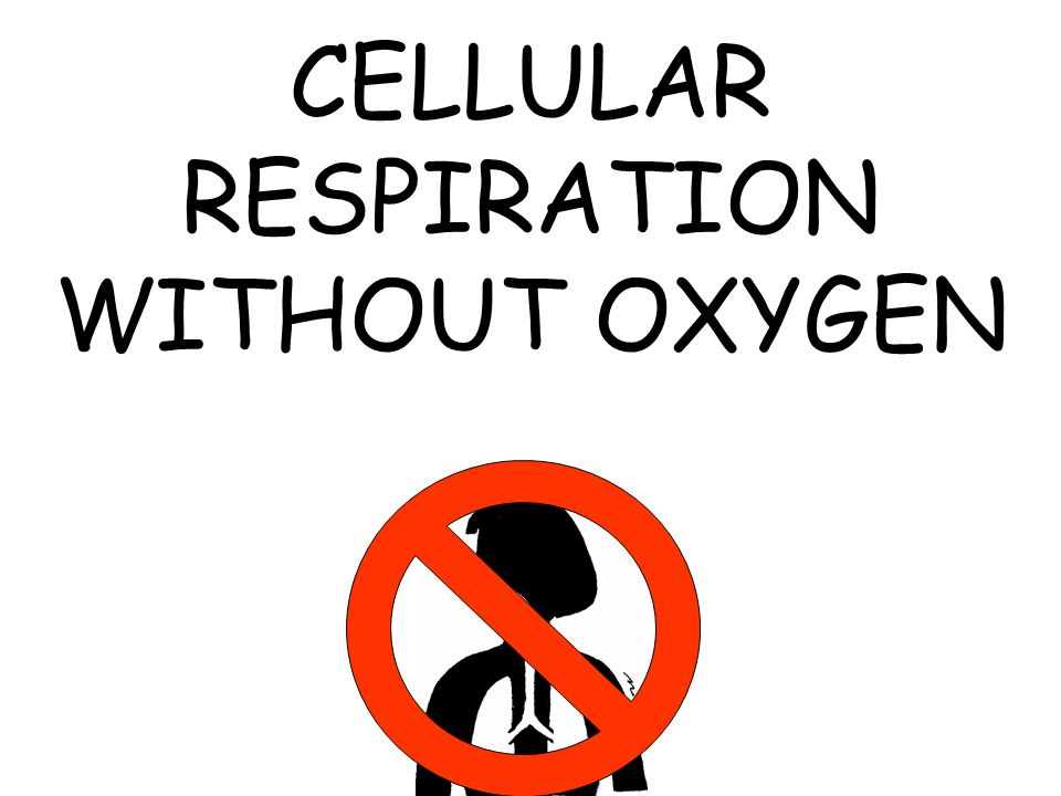 CELLULAR RESPIRATION WITHOUT OXYGEN