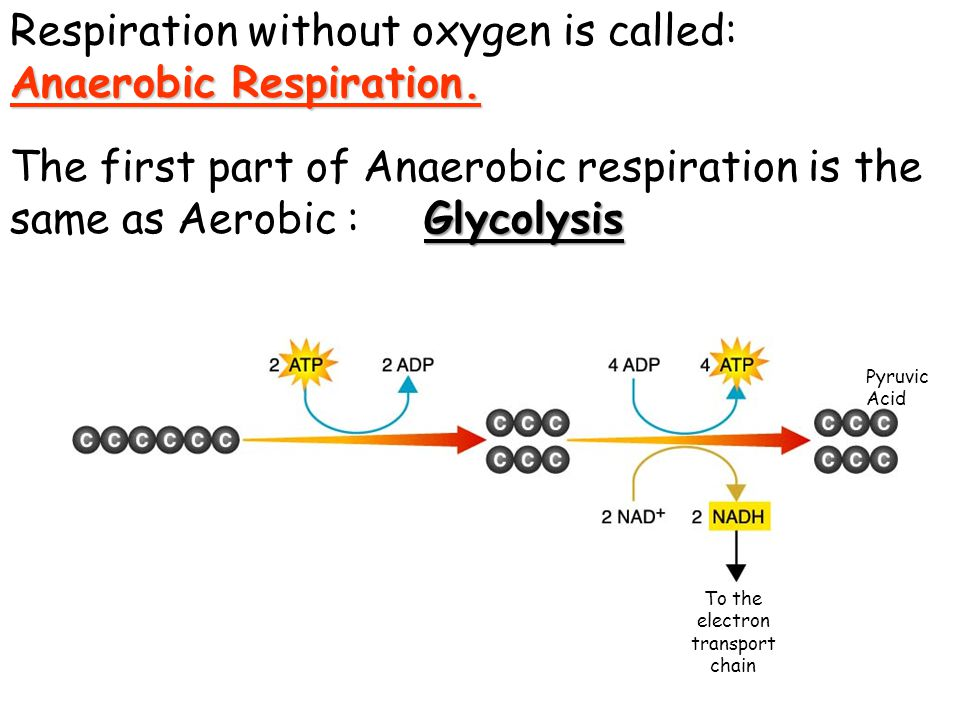 Glycolysis used 2 ATP To the electron transport chain Broke into two 3-Carbon molecules called Pyruvic acid Pyruvic Acid