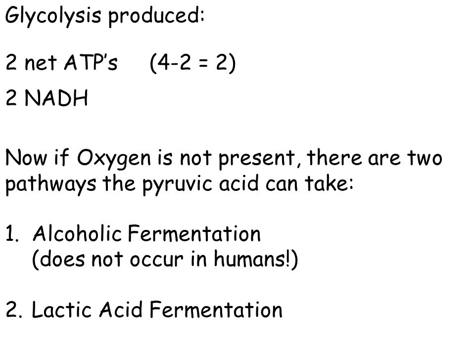 Glycolysis produced: 2 net ATP's (4-2 = 2) 2 NADH Now if Oxygen is not present, there are two pathways the pyruvic acid can take: 1.Alcoholic Fermenta