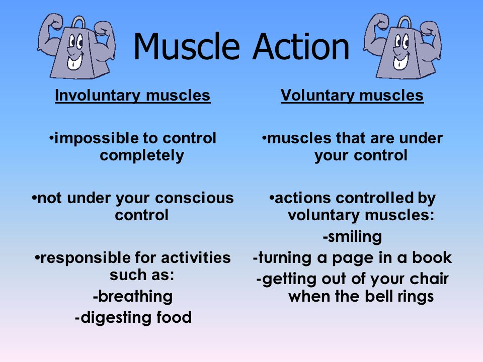 Muscle Action Involuntary muscles impossible to control completely not under your conscious control responsible for activities such as: - breathing -d
