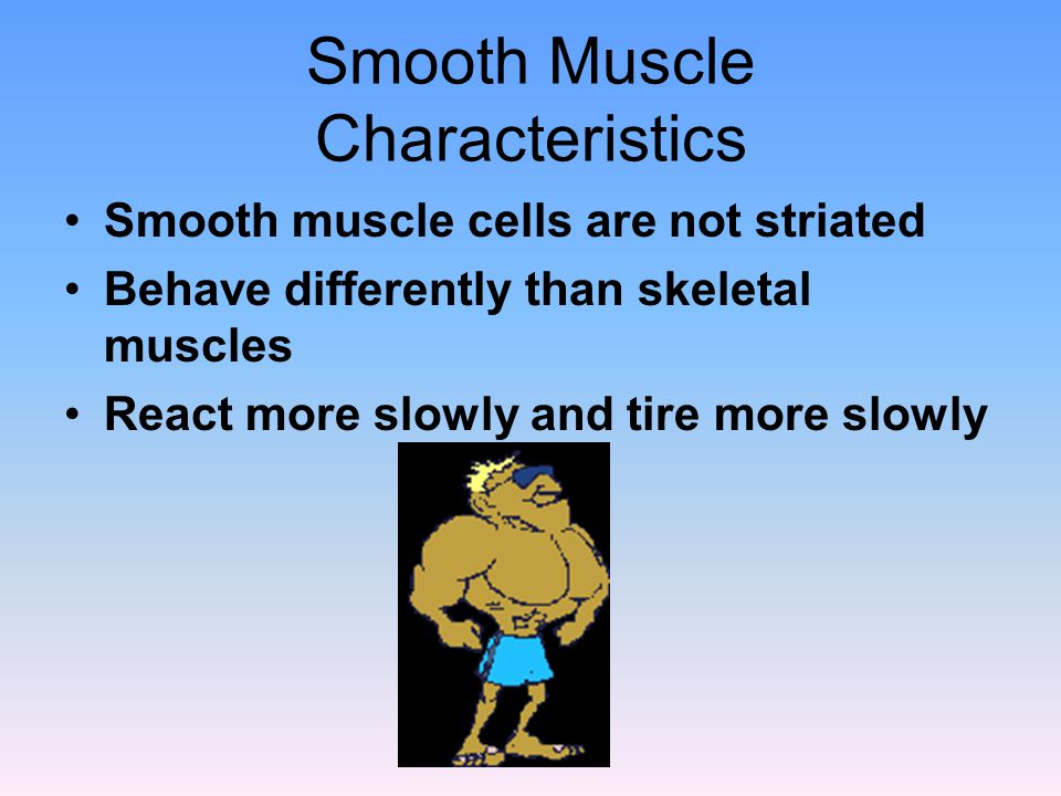 Smooth Muscle Characteristics Smooth muscle cells are not striated Behave differently than skeletal muscles React more slowly and tire more slowly