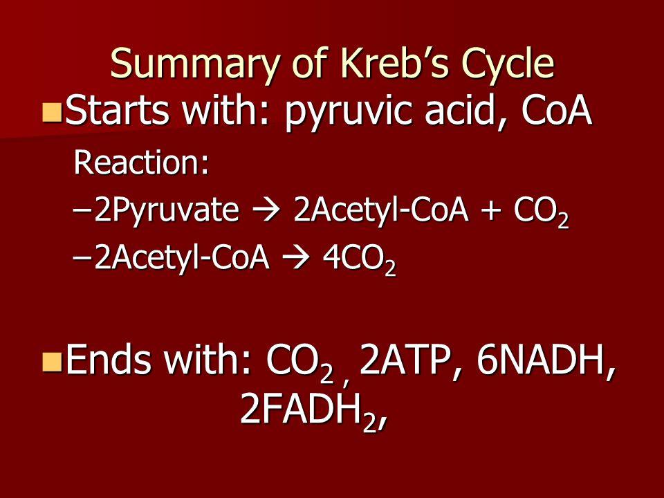 Krebs –Can bacteria do Krebs??