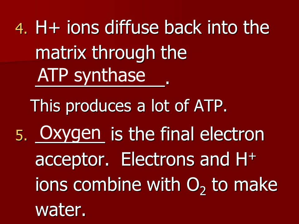 Electron Transport Chain Summary: Gather up ALL the electron carriers and empty them to charge lots of ATP Summary: Gather up ALL the electron carriers and empty them to charge lots of ATP Reaction: Reaction: –O2  H2O Energy molecules USED: 10 NADH (from krebs and glycolysis) + 2 FADH (from krebs) Energy molecules MADE: 32 ATP