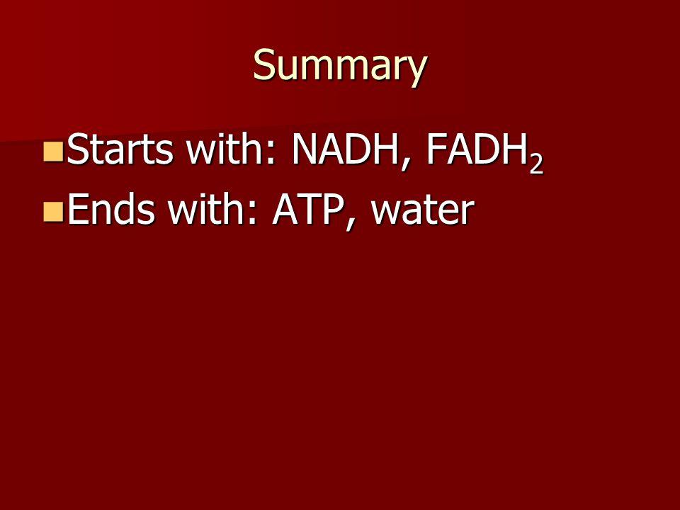 ATP Tallies: Aerobic: - Glycolysis: used 2, made 4 - Krebs: used 0, made 2 - ETC: used 0, made 32 Total: +36 ATP per glucose