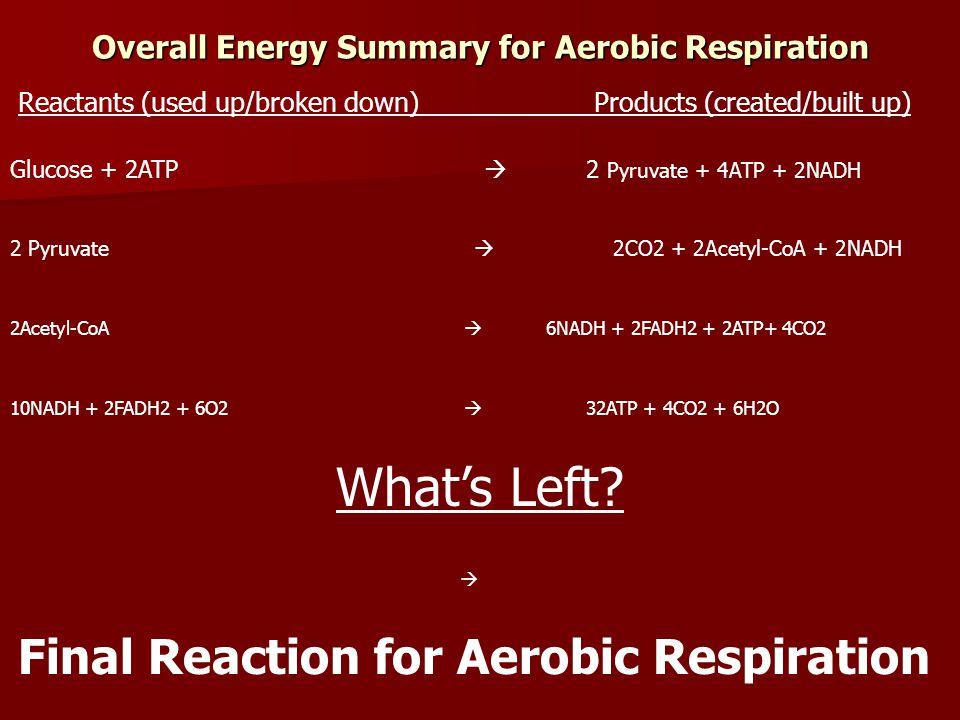 Overall reaction + 6O 2  6CO 2 + 6H 2 O C 6 H 12 O 6 ATP
