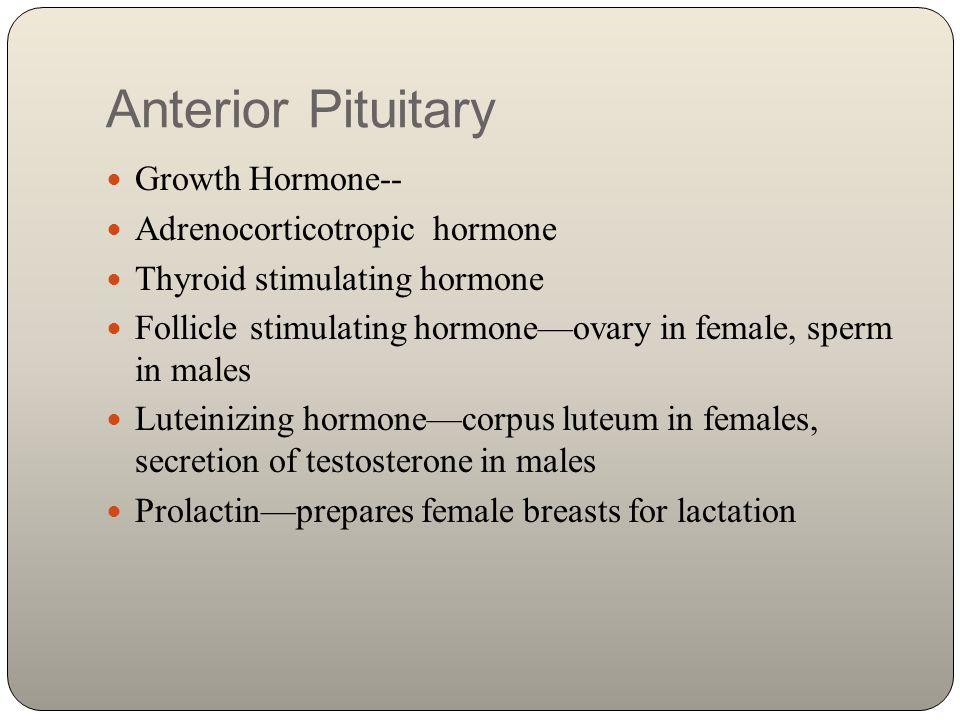 Anterior Pituitary Growth Hormone-- Adrenocorticotropic hormone Thyroid stimulating hormone Follicle stimulating hormone—ovary in female, sperm in mal