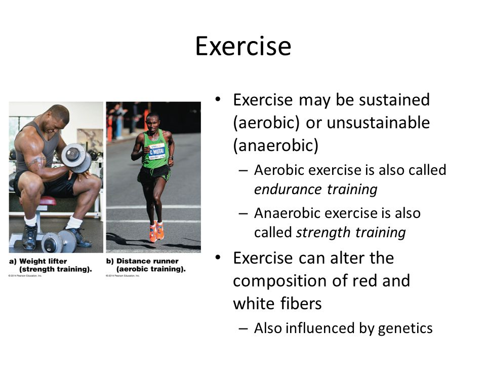 Exercise Exercise may be sustained (aerobic) or unsustainable (anaerobic) – Aerobic exercise is also called endurance training – Anaerobic exercise is also called strength training Exercise can alter the composition of red and white fibers – Also influenced by genetics