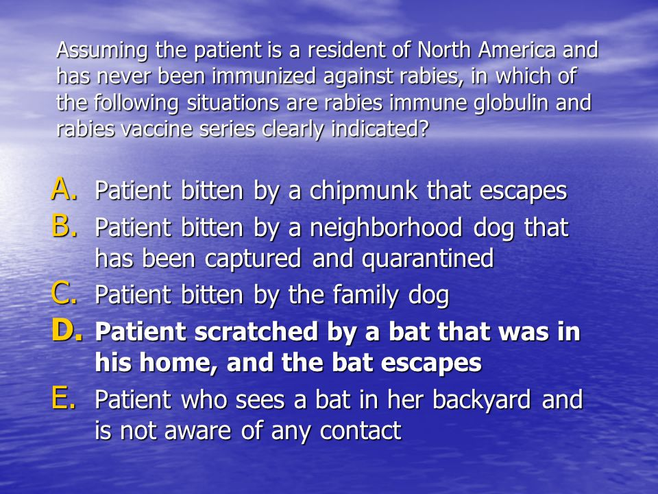 Assuming the patient is a resident of North America and has never been immunized against rabies, in which of the following situations are rabies immune globulin and rabies vaccine series clearly indicated.