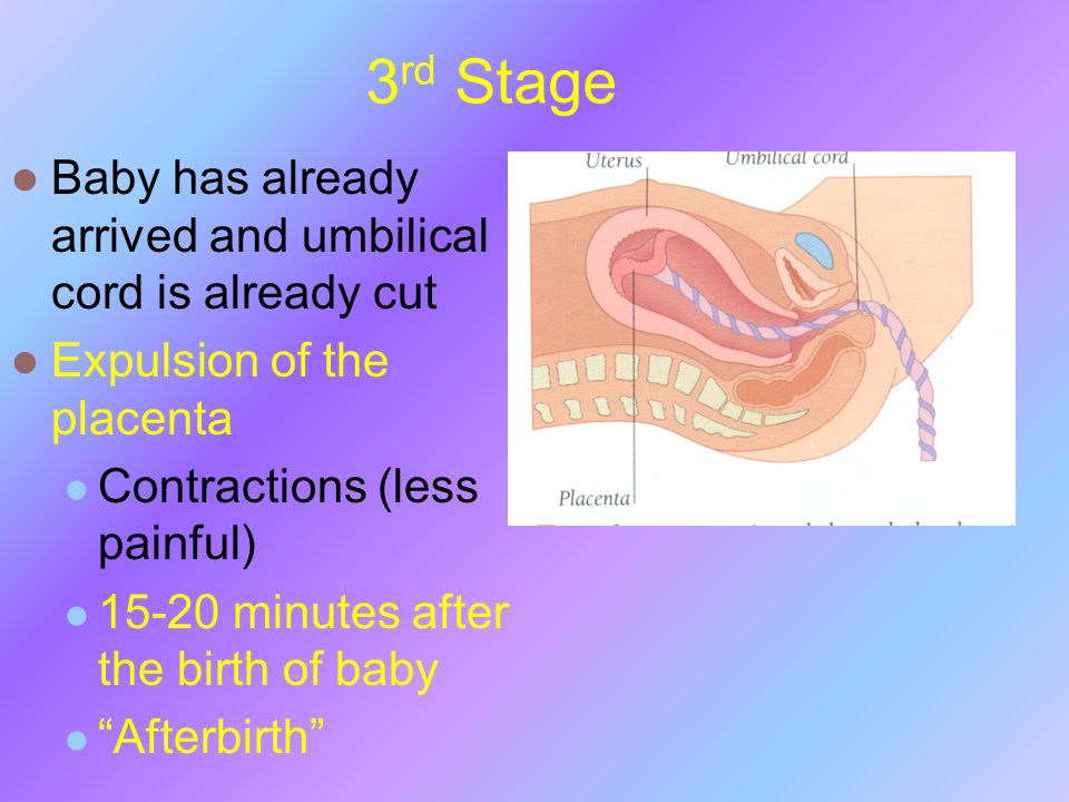 3 rd Stage Baby has already arrived and umbilical cord is already cut Expulsion of the placenta Contractions (less painful) 15-20 minutes after the bi