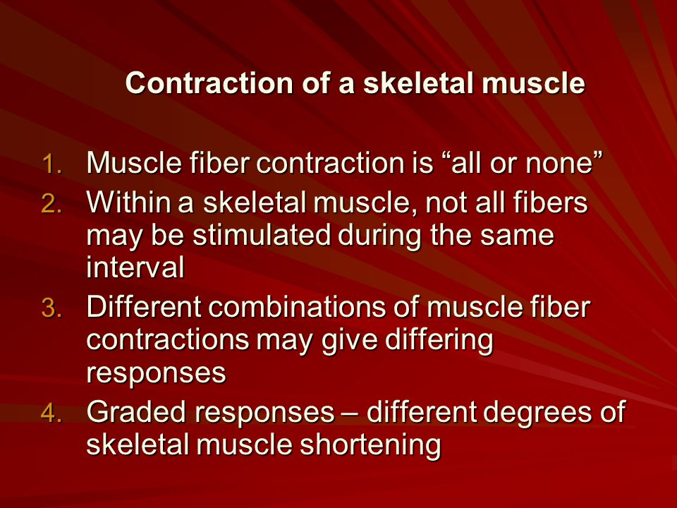 """Contraction of a skeletal muscle 1. Muscle fiber contraction is """"all or none"""" 2. Within a skeletal muscle, not all fibers may be stimulated during the"""