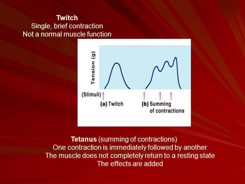 Twitch Single, brief contraction Not a normal muscle function Tetanus (summing of contractions) One contraction is immediately followed by another The