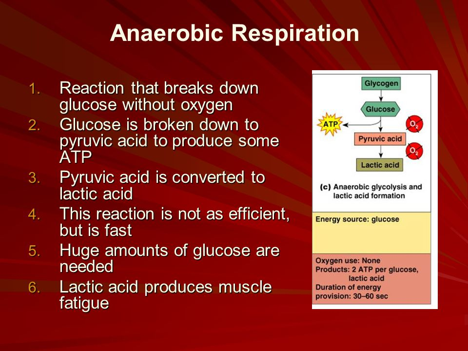 1. Reaction that breaks down glucose without oxygen 2. Glucose is broken down to pyruvic acid to produce some ATP 3. Pyruvic acid is converted to lact