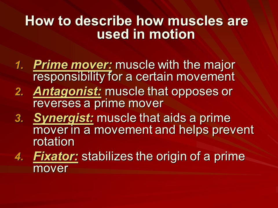How to describe how muscles are used in motion 1. Prime mover: muscle with the major responsibility for a certain movement 2. Antagonist: muscle that