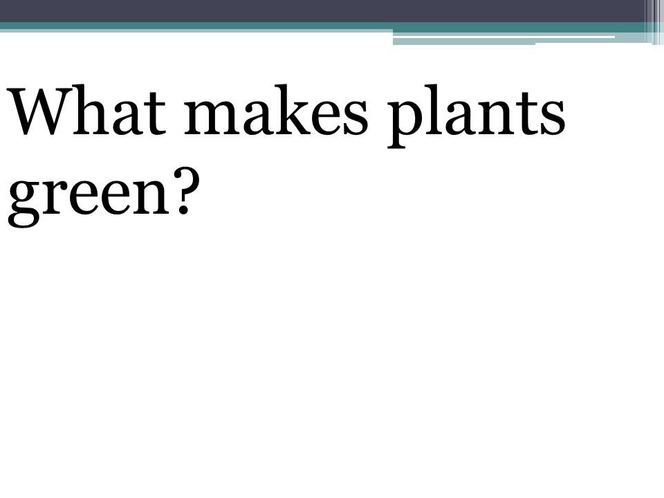 What makes plants green