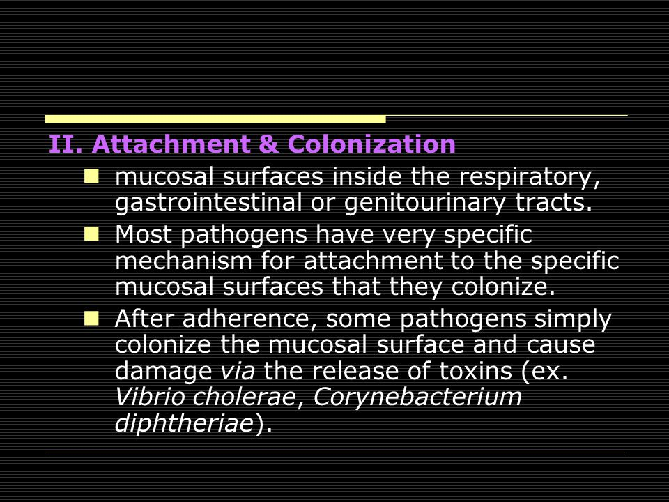 II. Attachment & Colonization mucosal surfaces inside the respiratory, gastrointestinal or genitourinary tracts. Most pathogens have very specific mec
