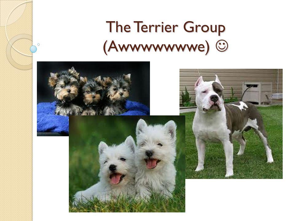 The Terrier Group (Awwwwwwwe) The Terrier Group (Awwwwwwwe)