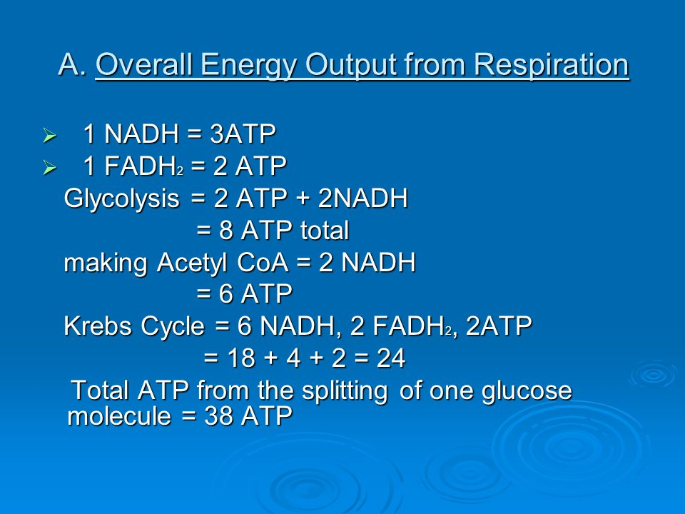 A. Overall Energy Output from Respiration  1 NADH = 3ATP  1 FADH 2 = 2 ATP Glycolysis = 2 ATP + 2NADH Glycolysis = 2 ATP + 2NADH = 8 ATP total = 8 A