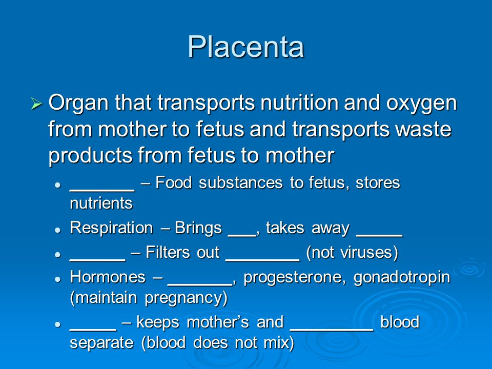 Placenta  Organ that transports nutrition and oxygen from mother to fetus and transports waste products from fetus to mother _______ – Food substances to fetus, stores nutrients _______ – Food substances to fetus, stores nutrients Respiration – Brings ___, takes away _____ Respiration – Brings ___, takes away _____ ______ – Filters out ________ (not viruses) ______ – Filters out ________ (not viruses) Hormones – _______, progesterone, gonadotropin (maintain pregnancy) Hormones – _______, progesterone, gonadotropin (maintain pregnancy) _____ – keeps mother's and _________ blood separate (blood does not mix) _____ – keeps mother's and _________ blood separate (blood does not mix)