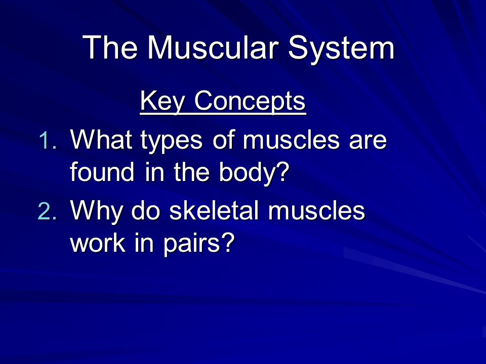 The Muscular System Key Concepts 1. What types of muscles are found in the body? 2. Why do skeletal muscles work in pairs?
